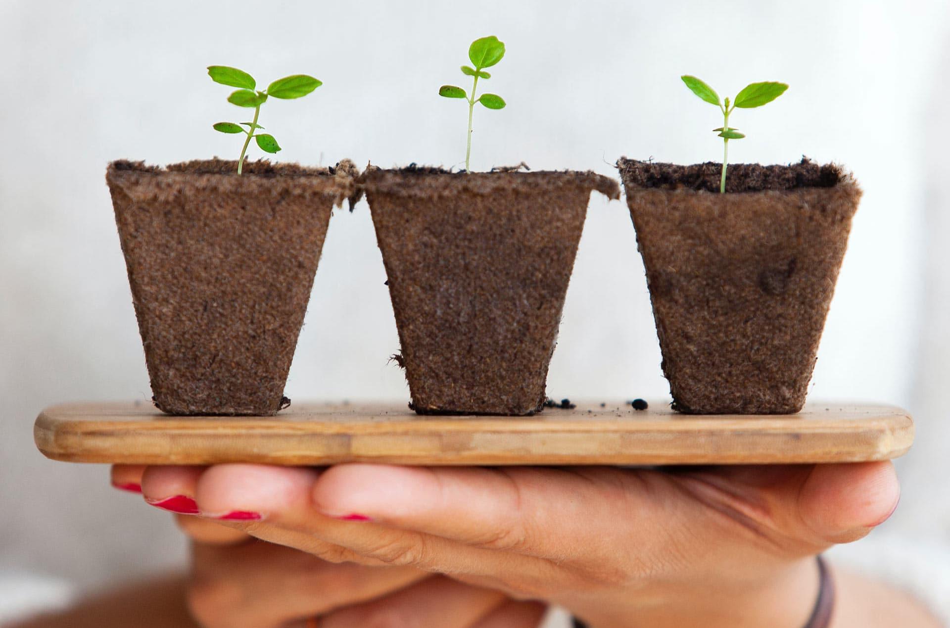 pot plants on tray